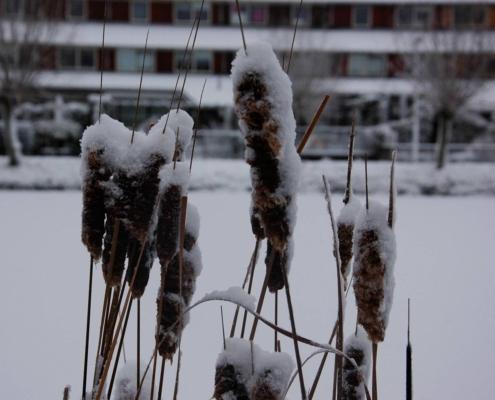 tuin winterklaar maken
