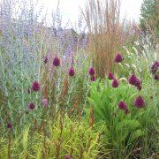 Beplantingsadvies voor tuin