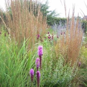 Planten voor prairieborders