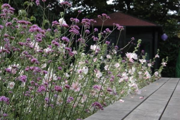 Prairie tuin ontwerpen in Harmelen