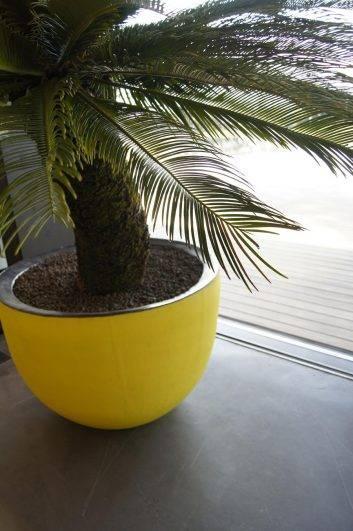Kamerplanten en interieurbeplanting in grote potten en kamerplanten - Terracotta sokkel ...