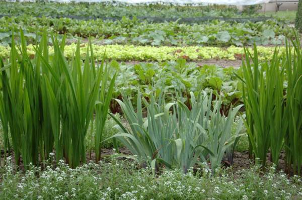 franse tuin ontwerpen met moestuin