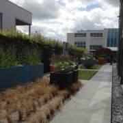 tuinarchitect van moderne tuinen