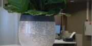 terracotta pot binnen 1