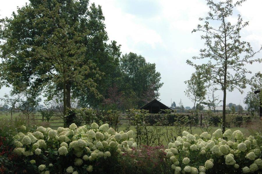 landelijke tuin ontwerpen