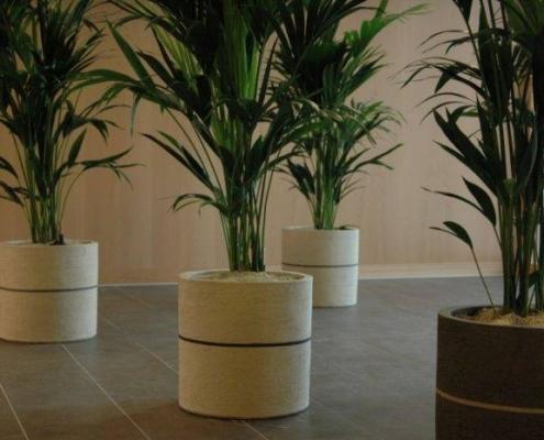 kantoorplanten