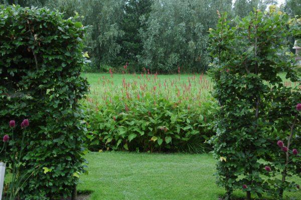 Landschapstuin ontwerpen door tuinarchitect