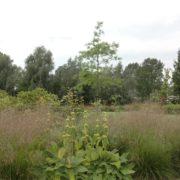 grote tuin ontwerpen