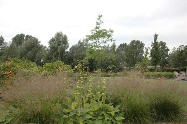 Prairie tuin ontwerpen in Huissen