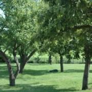 tuinontwerp voor grote tuin