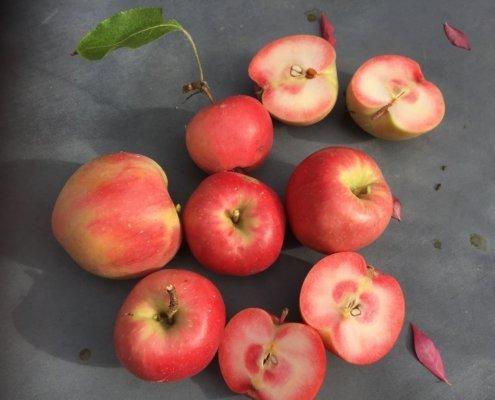 Kleine fruitbomen voor de tuin