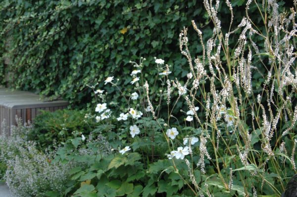 kleine tuinen ontwerpen ideeën