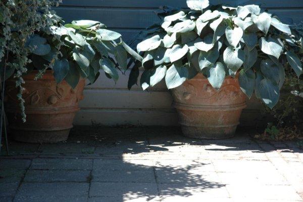 Planten voor de cottage tuin