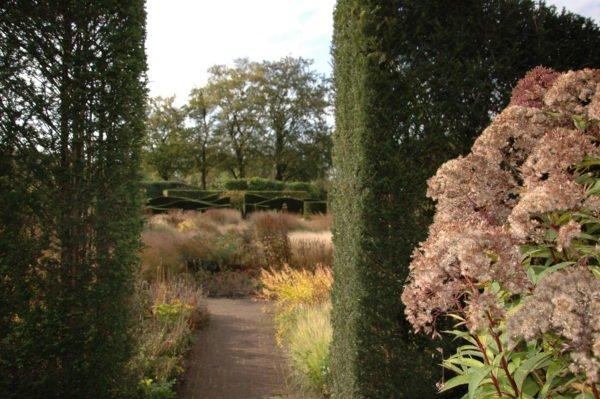 Natuurlijke tuin ontwerpen met hoge hagen