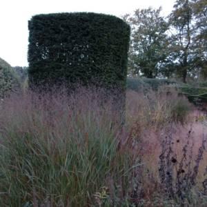 Natuurlijke tuin ontwerpen in Den Haag