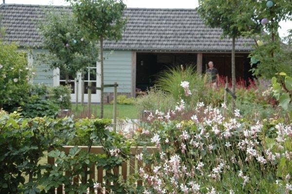 Opvallende vaste planten in tuin