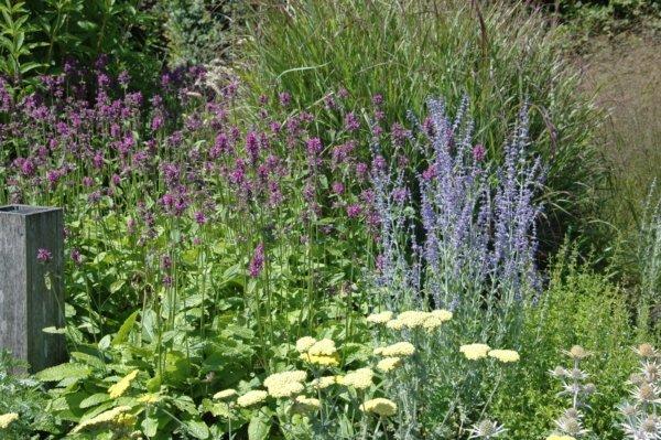 Klimaatverandering en tuinieren