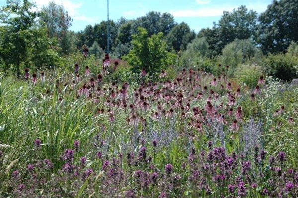 Prairieborders in tuin