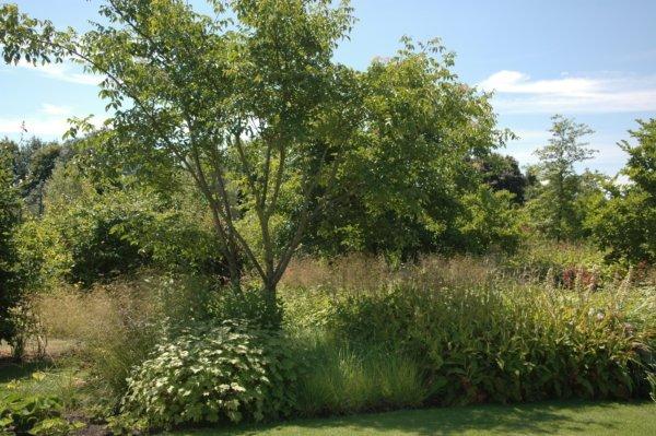 Planten voor prairietuin