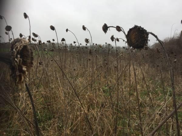 Wat is belangrijk bij tuinontwerp