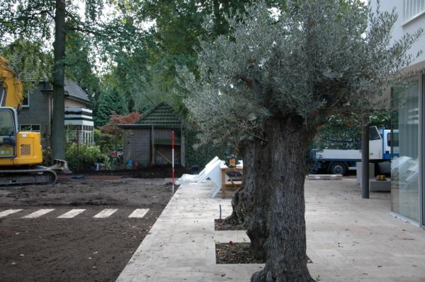 Tijdloze villatuin met grote Olijfbomen