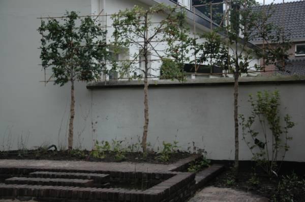 Planten voor in en rond de vijver